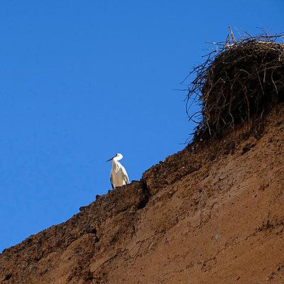 Stork - p1105m2043833 by Virginie Plauchut