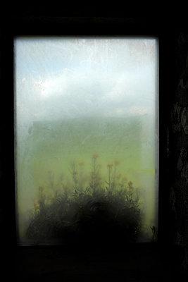 Wildblumen hinter Glas - p116m2244803 von Gianna Schade