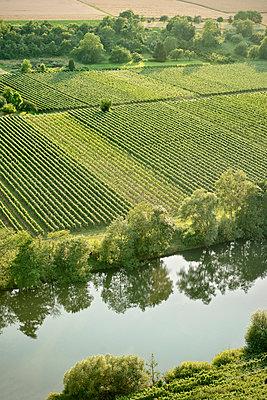 Neckar und Weinfelder, Hessigheim, Baden-Württemberg, Deutschland - p1316m1160871 von Günther Bayerl