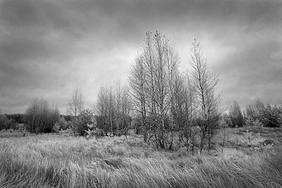 Landschaft in Russland - p1653m2232288 von Vladimir Proshin