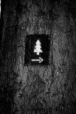 Forest track / Hiking trail - p1199m2152910 by Claudia Jestremski