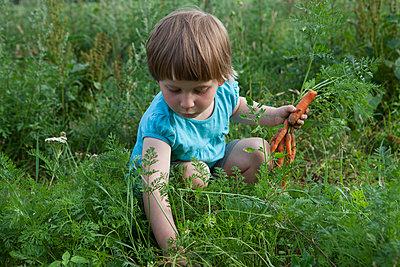 Girl harvesting carrots in vegetable garden - p301m2018090 by Julia Christe