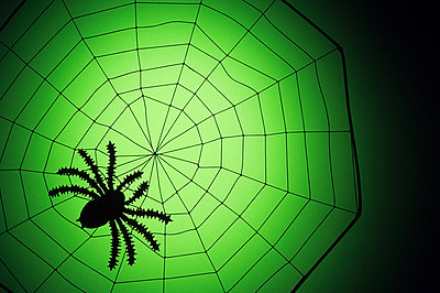 Spider on a web - p9247777f by Image Source