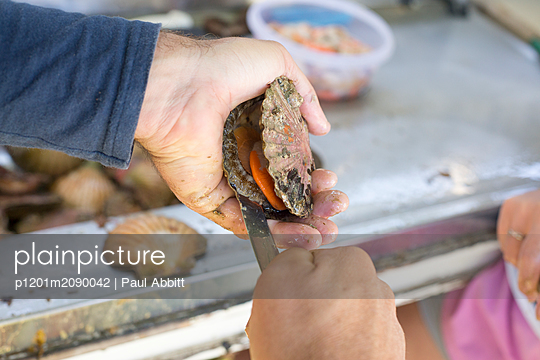 Man opening freshly caught scallop with knife - p1201m2090042 by Paul Abbitt