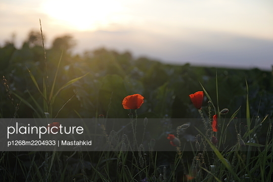 p1268m2204933 by Mastahkid