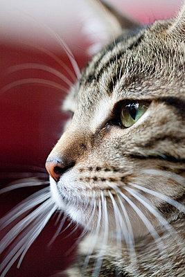 Portrait of cat - p9240881 by Adrianko