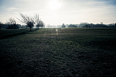 The downs at dawn - p1047m2179271 by Sally Mundy