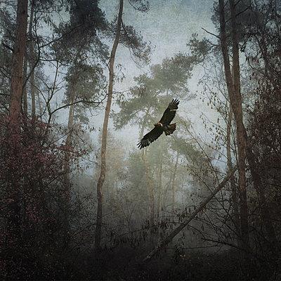 Through the Woods - p1633m2209071 von Bernd Webler
