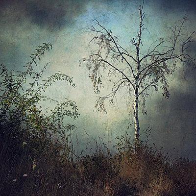 Little Birch Tree - p1633m2210016 by Bernd Webler