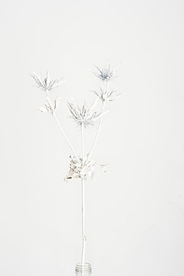 p1323m1510703 by Sarah Toure