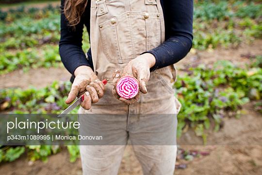 p343m1089995 von Monica Donovan