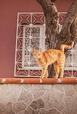 Katze - p1136m933719 von Sabine Lewandowski
