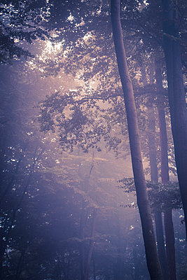 Foggy forest - p1199m2143107 by Claudia Jestremski