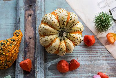 Autumnal decoration with two ornamental pumpkins and Chinese lanterns - p300m2060462 von JLPfeifer