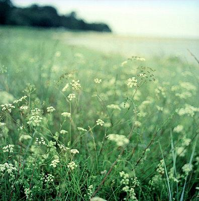 Spring - p989m668454 by Gine Seitz