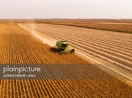 Aerial view of combine harvester on a field of soybean - p300m2189048 by oticki