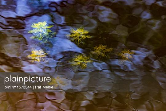 Wasserpflanzen - p417m1573544 von Pat Meise