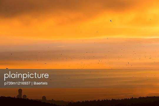 Sonnenaufgang mit Möwenschwarm - p739m1216937 von Baertels