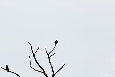Krähen im Winter - p1357m1539126 von Amadeus Waldner