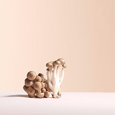 Mushrooms - p1629m2211355 by martinameier