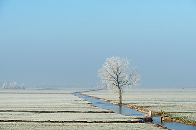 Polder landscape in winter, Meerkerk, South Holland, Netherlands - p429m1227264 by Mischa Keijser