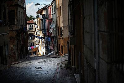 Stray cat - p1007m959828 by Tilby Vattard