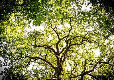 Treetop - p393m856231 by Manuel Krug