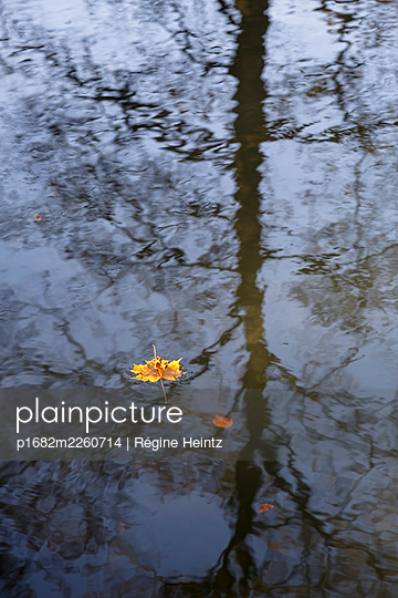 Autumn leaf floating on the water - p1682m2260714 by Régine Heintz