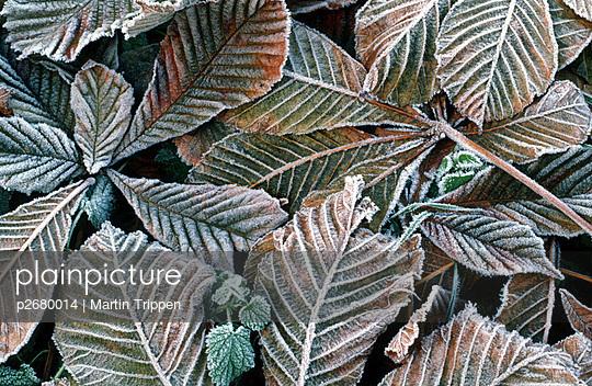 Bodenfrost - p2680014 von Martin Trippen