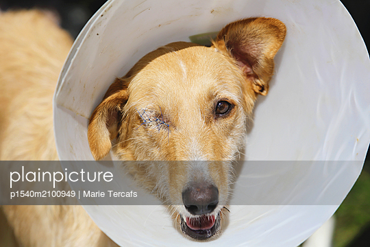 Enucleated dog - p1540m2100949 by Marie Tercafs