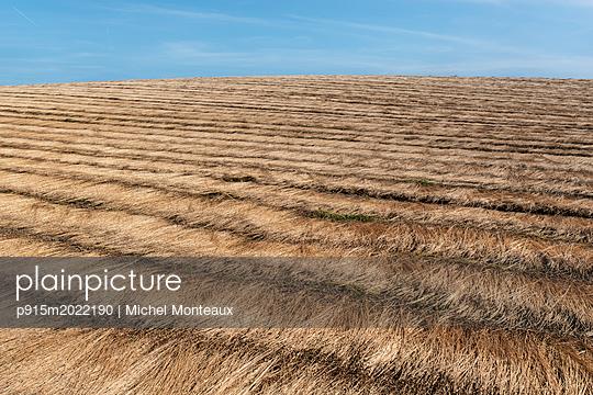 Flachsfeld - p915m2022190 von Michel Monteaux