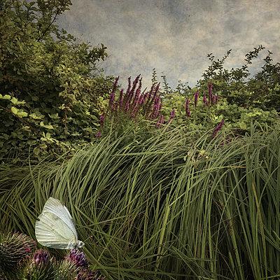 Summer Moments - p1633m2209098 by Bernd Webler