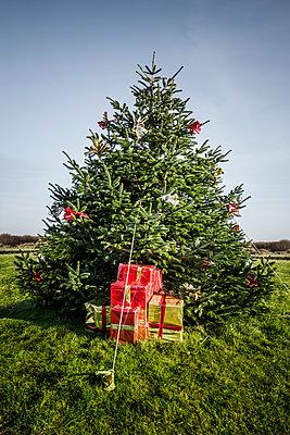 Weihnachtsgeschenke mit Christbaum - p248m1516087 von BY
