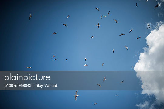 Seagulls in Istanbul - p1007m959943 by Tilby Vattard