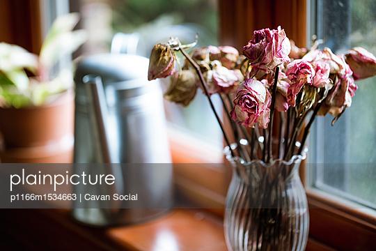 plainpicture - plainpicture p1166m1534663 - Roses in vase on window sill - plainpicture/Cavan Images/Cavan Social