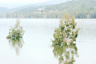 Eucalypts trees covered by water at Riudecanyes reservoir, inSpain - p1423m2158729 von JUAN MOYANO