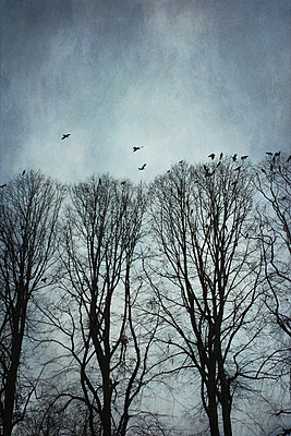 Germany, Wuppertal, bare trees and crows - p300m1010139 by Dirk Wüstenhagen