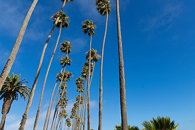 Low angle view of tall washingtonia palm trees, Los Angeles, California, USA - p429m1118545f by Aziz Ary Neto