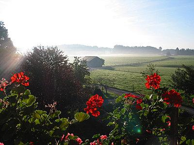 Morgennebel - p5630034 von Claude Langlois