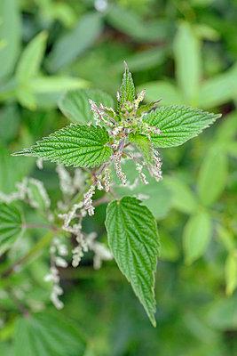 Medicinal plant - p6010187 by Alain Caste