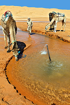 Sahara, Grand Erg Oriental - p636m931102 by François-Xavier Prévot