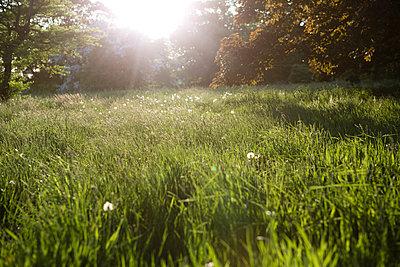 Sommerwiese - p1057m1146800 von Stephen Shepherd