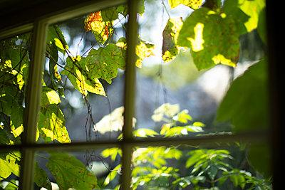 Blick aus einem Fenster - p1614m2206445 von James Godman