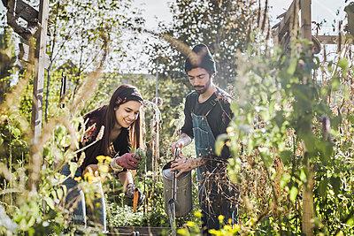 Happy couple gardening in urban garden together - p300m2104590 von ZOI IMAGERY