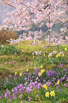 Yamanashi Prefecture; Japan - p307m963604f by SHOSEI