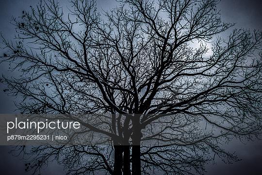 Baum in der Dämmerung - p879m2295231 von nico