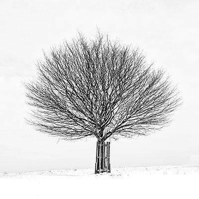 Baum in Schneelandschaft - p1256m2099740 von Sandra Jordan