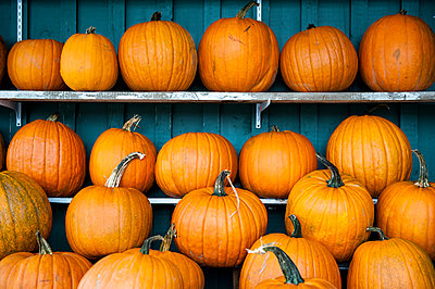Pumpkins on shelves - p343m2025930 by Joseph De Sciose