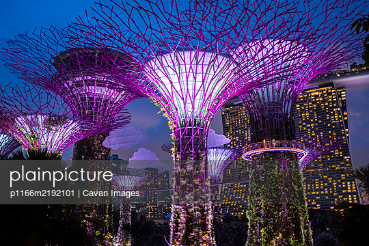 Solar-powered supertrees at dusk in Gardens By The Bay, Singapore. - p1166m2192101 by Cavan Images