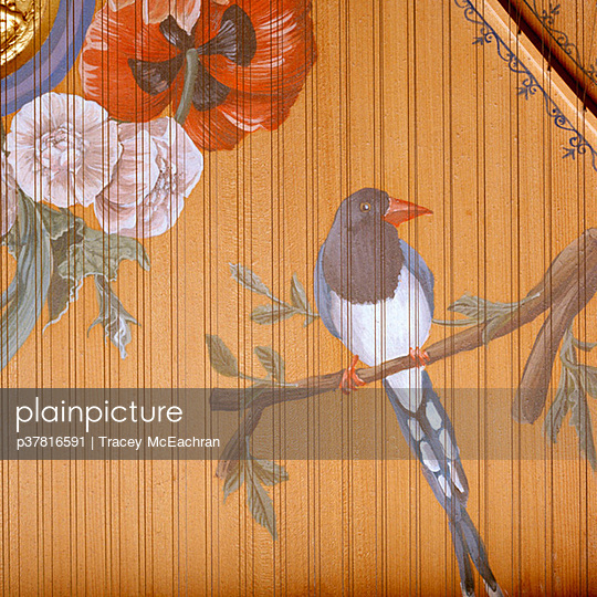 Bird on harpsichord soundboard - p37816591 by Tracey McEachran